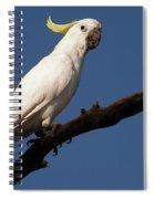 Australian Bird Spiral Notebook