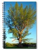 Australian Pine At Sundown Spiral Notebook