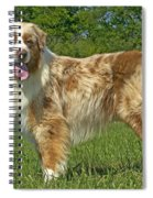 Australian Shepherd Dog Spiral Notebook