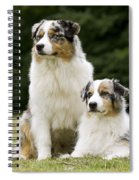 Australian Shepherd Dogs Spiral Notebook