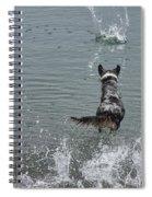 Australian Shepherd Fun At The Lake Chasing The Ball Spiral Notebook