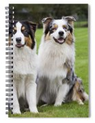 Australian Shepherds Spiral Notebook