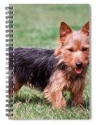 Australian Terrier Dog Spiral Notebook