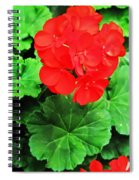 Austrian Red Spiral Notebook