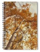 Autumn Aspens Spiral Notebook