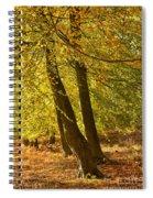 Autumn Beeches Spiral Notebook