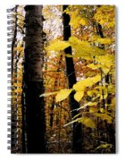 Autumn Birch Trees Spiral Notebook