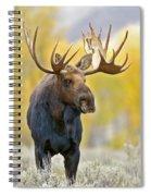 Autumn Bull Moose Spiral Notebook