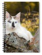 Autumn Cat Spiral Notebook