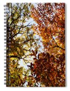 Autumn Chestnut Canopy   Spiral Notebook