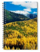 Autumn Color Larch Trees In Pine Tree Spiral Notebook