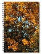 Autumn Colors 11 Spiral Notebook