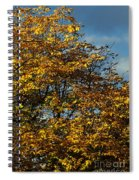 Autumn Colors 5 Spiral Notebook