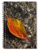 Autumn Colors And Playful Sunlight Patterns - Cherry Leaf Spiral Notebook