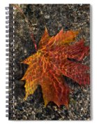Autumn Colors And Playful Sunlight Patterns - Maple Leaf Spiral Notebook