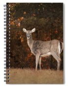 Autumn Doe Spiral Notebook