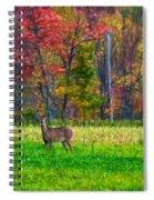Autumn Doe - Paint Spiral Notebook