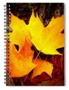 Autumn Fire Spiral Notebook