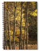 Autumn Forest Scene With Birches In West Michigan Spiral Notebook