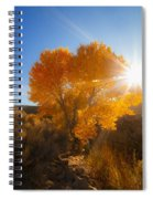 Autumn Golden Birch Tree In The Sun Fine Art Photograph Print Spiral Notebook
