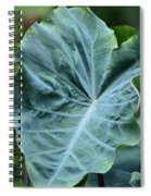 Autumn Green Spiral Notebook
