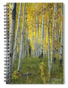 Autumn In The Aspen Grove Spiral Notebook
