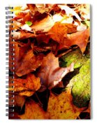 Autumn In The Forest Spiral Notebook