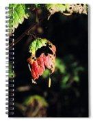 Autumn Leaf Spiral Notebook