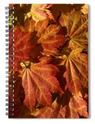 Autumn Leaves 00 Spiral Notebook