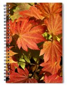 Autumn Leaves 01 Spiral Notebook