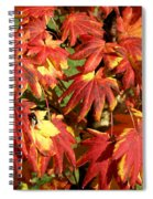 Autumn Leaves 07 Spiral Notebook