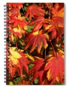 Autumn Leaves 08 Spiral Notebook