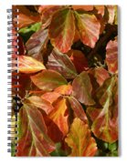 Autumn Leaves 81 Spiral Notebook
