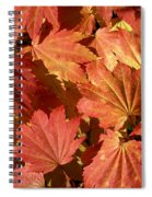 Autumn Leaves 98 Spiral Notebook
