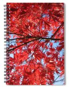 Autumn Leaves And Blue Sky Spiral Notebook
