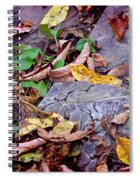 Autumn Leaves In Creek Bed Spiral Notebook