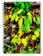 Autumn Leaves In Green And Yellow Spiral Notebook