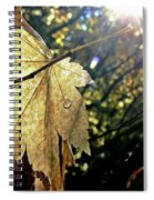 Autumn Light On Leaf Spiral Notebook