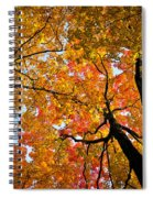 Autumn Maple Trees Spiral Notebook