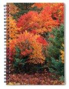 Autumn Maple Trees Spiral Notebook