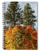 Autumn Maple With Pines Spiral Notebook