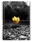 Autumn Oak Isolations Spiral Notebook