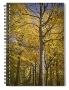 Autumn Orange Forest Colors At Hager Park No.1189 Spiral Notebook