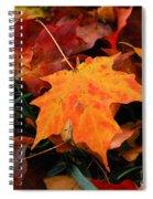 Autumn Palette  Spiral Notebook