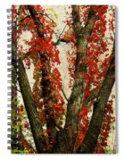 Autumn Red Spiral Notebook