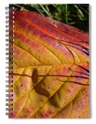 Autumn Saga Spiral Notebook