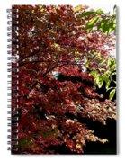Autumn Snowball Bush Spiral Notebook