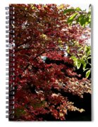 Autumn Snowball Bush Spiral Notebook