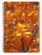 Autumn Splendor 15 Spiral Notebook