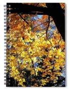 Autumn Splendor 3 Spiral Notebook